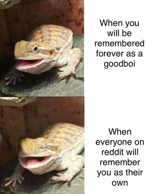 Reptile - When you will be remembered forever as a goodboi When everyone on reddit will remember you as their Own
