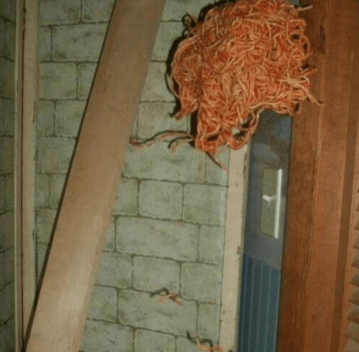 cursed images - Wall