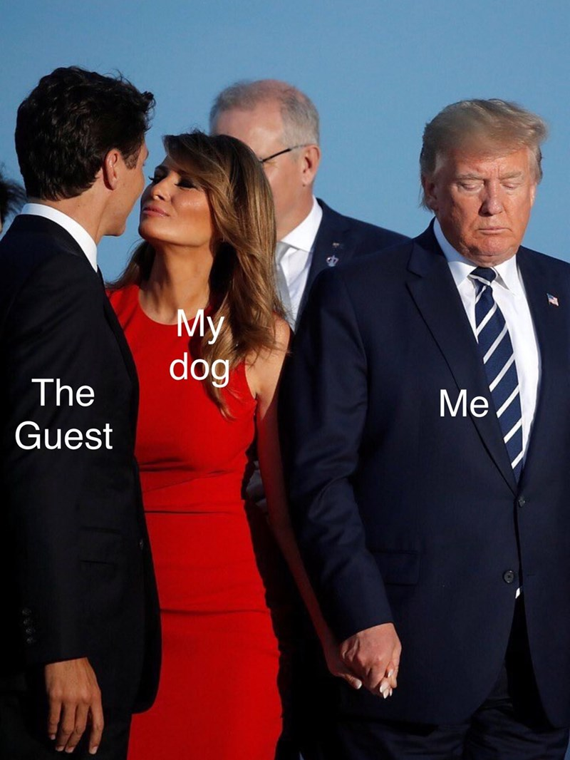 Suit - My dog The Me Guest