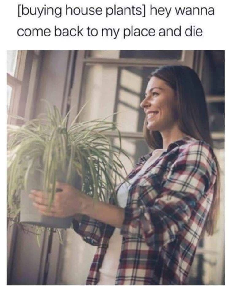 Hair - [buying house plants] hey wanna come back to my place and die