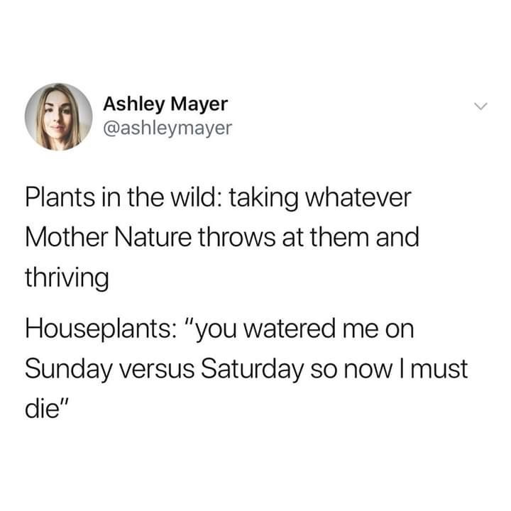 """Text - Ashley Mayer @ashleymayer Plants in the wild: taking whatever Mother Nature throws at them and thriving Houseplants: """"you watered me on Sunday versus Saturday so now Imust die"""""""