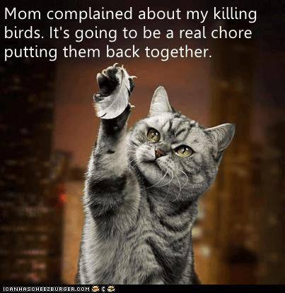 Lolcats - LOL at Funny Cat Memes - Funny cat pictures with