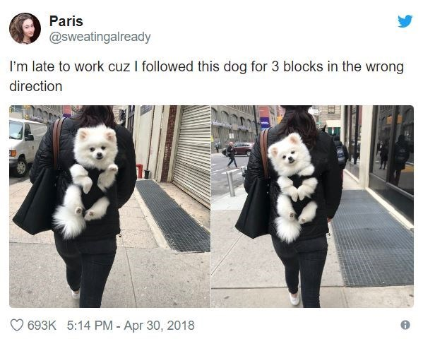 Fur - Paris @sweatingalready I'm late to work cuz I followed this dog for 3 blocks in the wrong direction 693K 5:14 PM - Apr 30, 2018