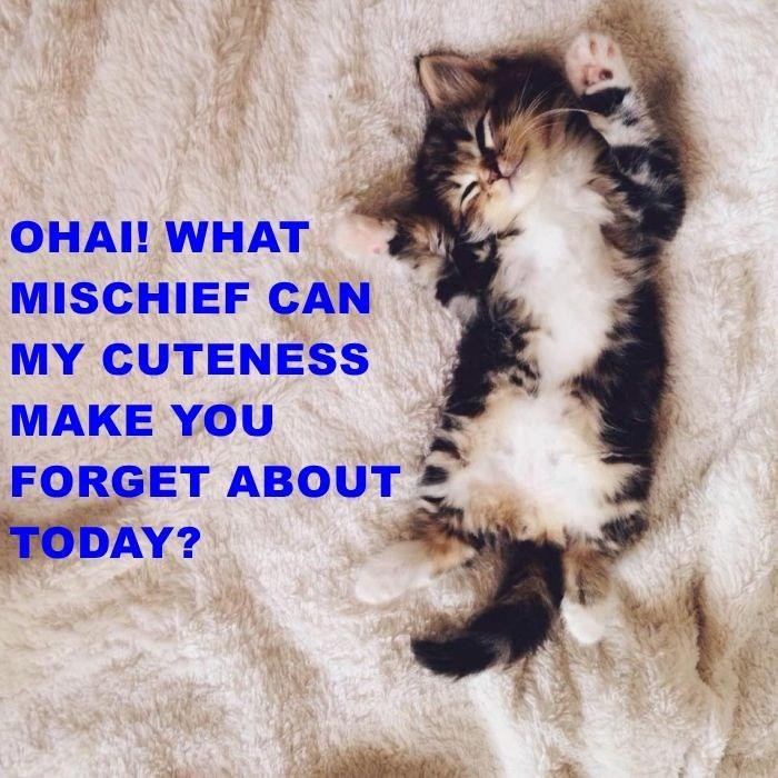 Cat - OHAI! WHAT MISCHIEF CAN MY CUTENESS MAKE YOU FORGET ABOUT TODAY?