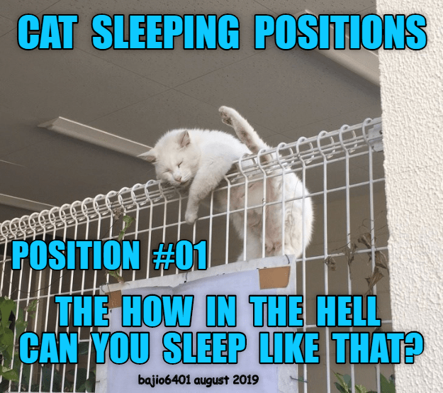 Photo caption - CAT SLEEPING POSITIONS POSITION #01 THE HOW IN THE HELL CAN YOU SLEEP LIKE THAT? bajio6401 august 2019