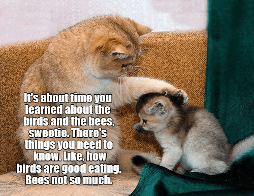 Cat - It's about time you learned about the birds and the bees, Sweetie. There's things you need to know. Like, how birdsare good eating. Bees not so much