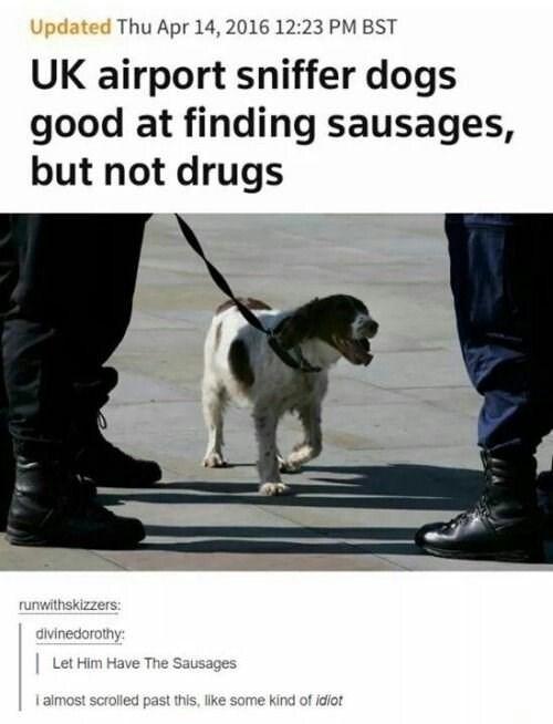 dog memes - 9351662592