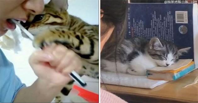 cats instagram videos cute