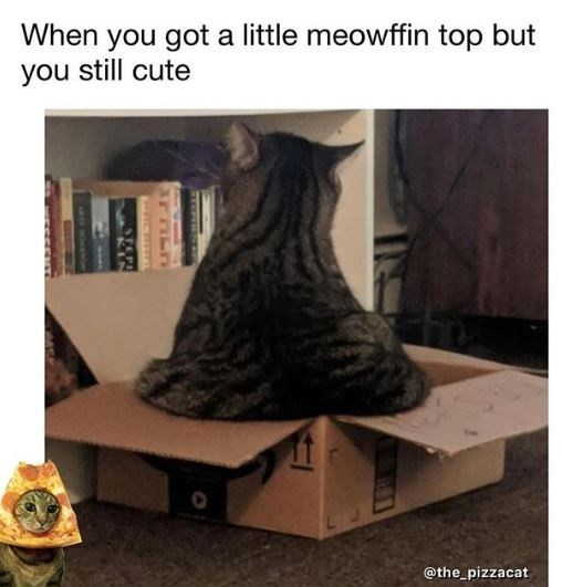 Cat - When you got a little meowffin top but you still cute @the pizzacat sNT