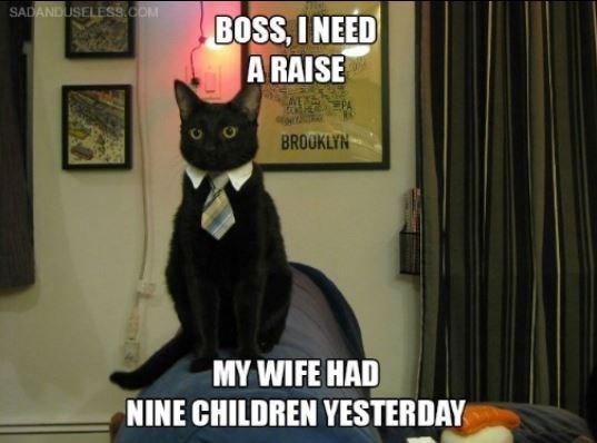 Cat - SADANDUSELESS.cOM BOSS, INEED A RAISE BROOKLYN MY WIFE HAD NINE CHILDREN YESTERDAY