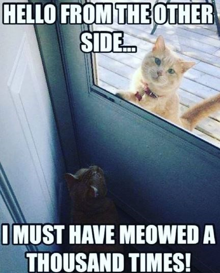 Internet meme - HELLO FROM THEOTHER SIDE. IMUST HAVE MEOWED A THOUSAND TIMES!