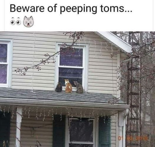 Siding - Beware of peeping toms... O 2019