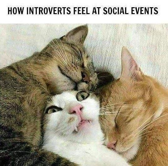 Cat - HOW INTROVERTS FEEL AT SOCIAL EVENTS