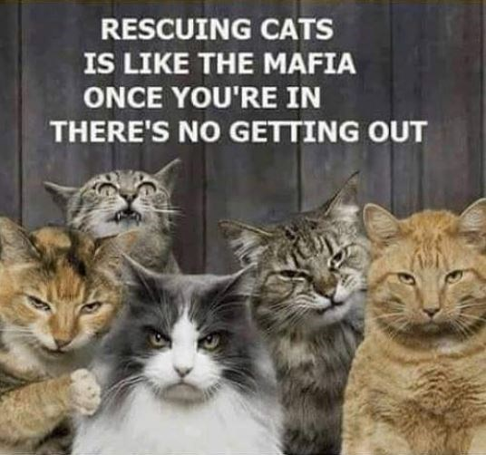 Cat - RESCUING CATS IS LIKE THE MAFIA ONCE YOU'RE IN THERE'S NO GETTING OUT