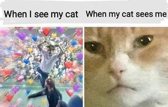 Cat - When I see my cat When my cat sees me