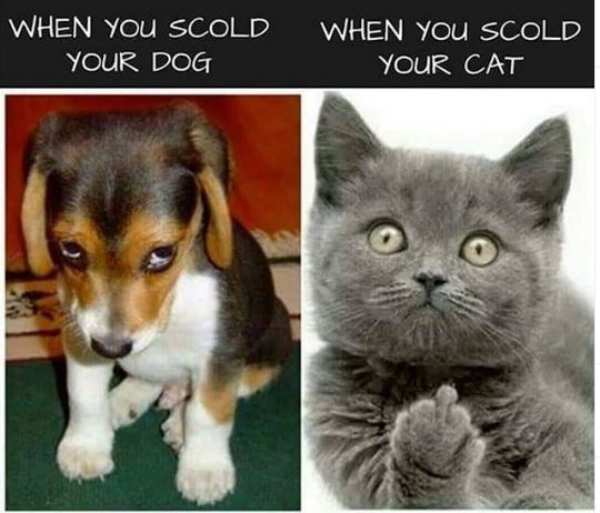 Dog breed - WHEN YOu SCOLD WHEN YOU SCOLD YOUR DOG YOUR CAT