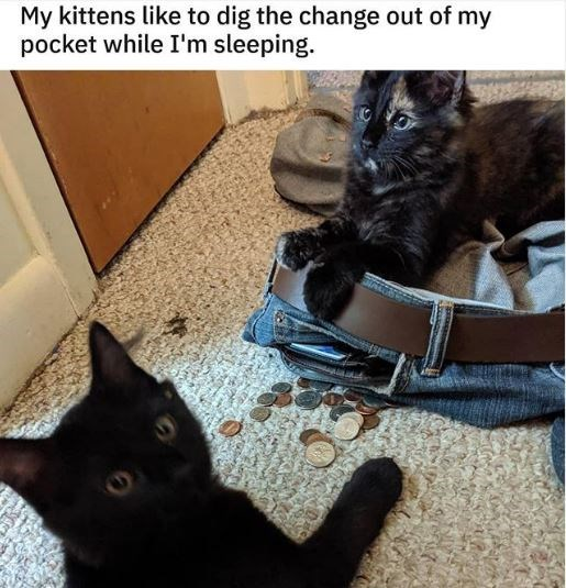 Cat - My kittens like to dig the change out of my pocket while I'm sleeping.
