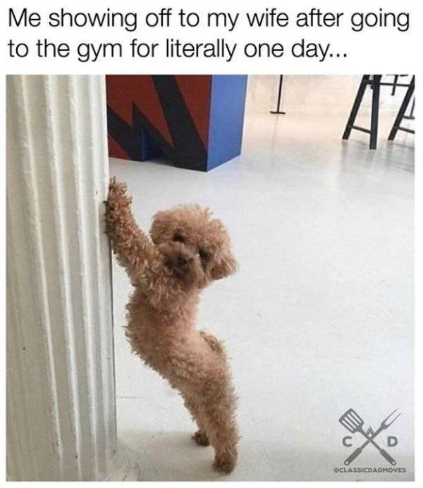 Dog - Me showing off to my wife after going to the gym for literally one day... AZ eCLASSICDAOMOVES