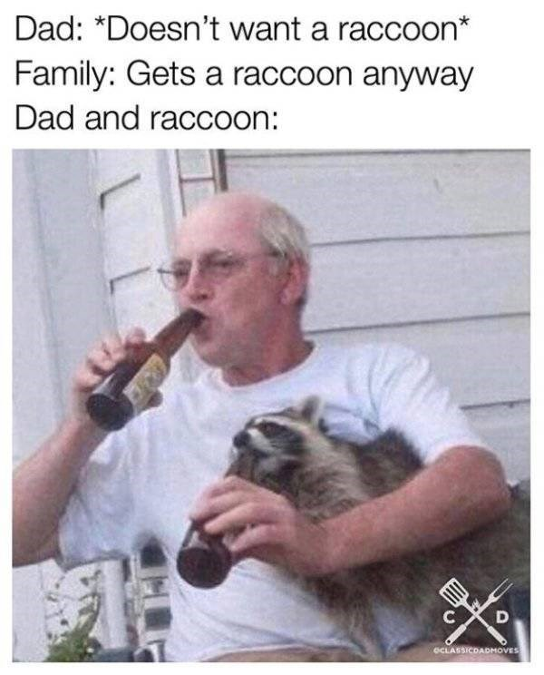Photo caption - Dad: *Doesn't want a raccoon* Family: Gets a raccoon anyway Dad and raccoon: D C oCLASSICDADMOVES