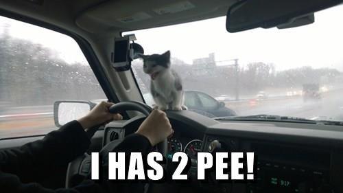 cat memes - 9351834368