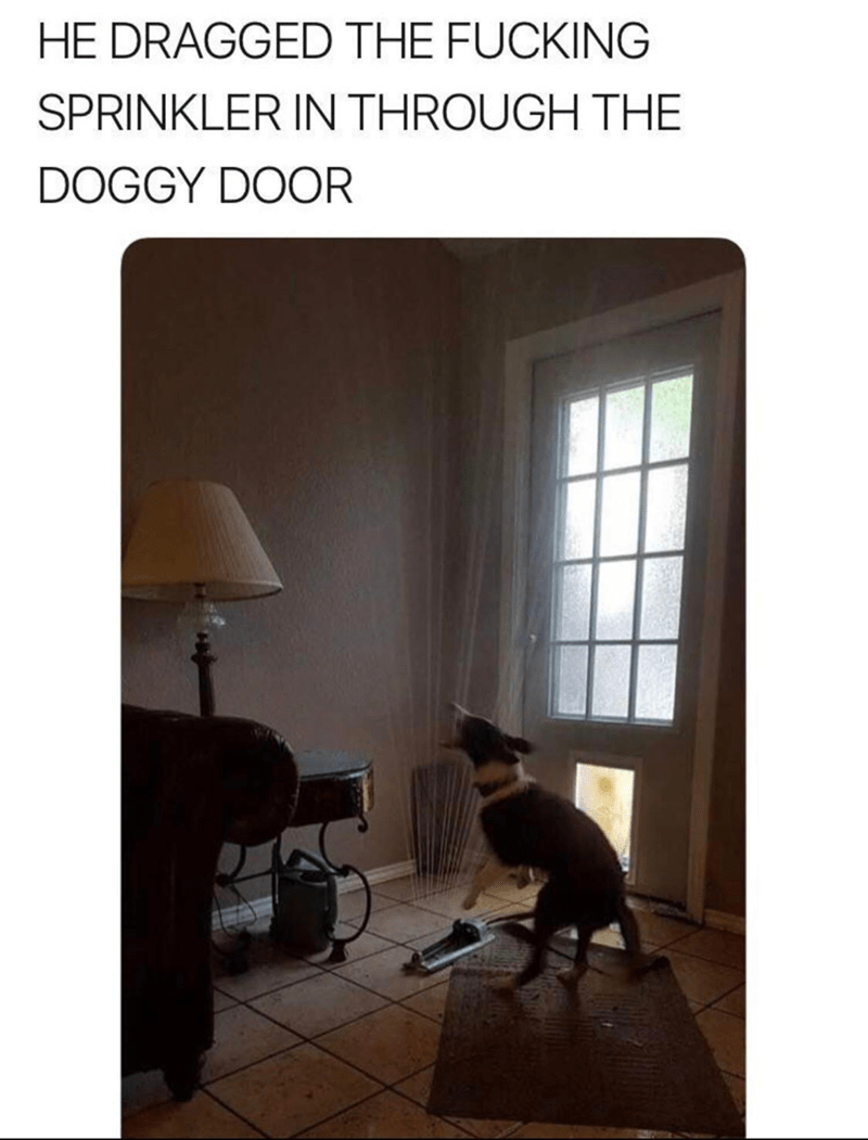 """Meme - """"HE DRAGGED THE FUCKING SPRINKLER IN THROUGH THE DOGGY DOOR"""""""