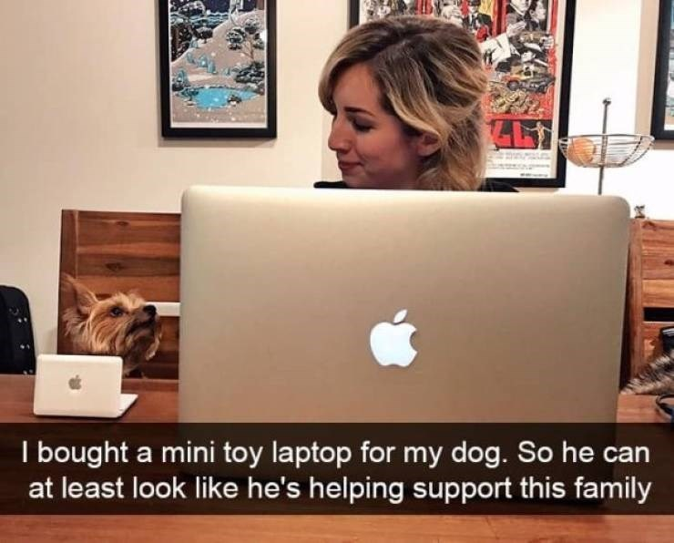 dog snapchat - Technology - I bought a mini toy laptop for my dog. So he can at least look like he's helping support this family
