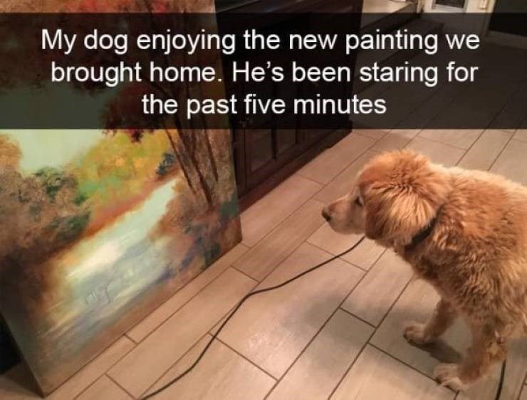 dog snapchat - Mammal - My dog enjoying the new painting we brought home. He's been staring for the past five minutes