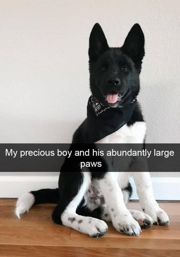 dog snapchat - Dog - My precious boy and his abundantly large paws
