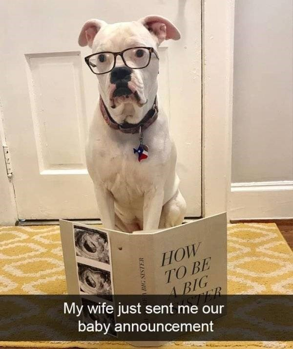 dog snapchat - Canidae - HOW TO BE ABIG My wife just sent me our baby announcement