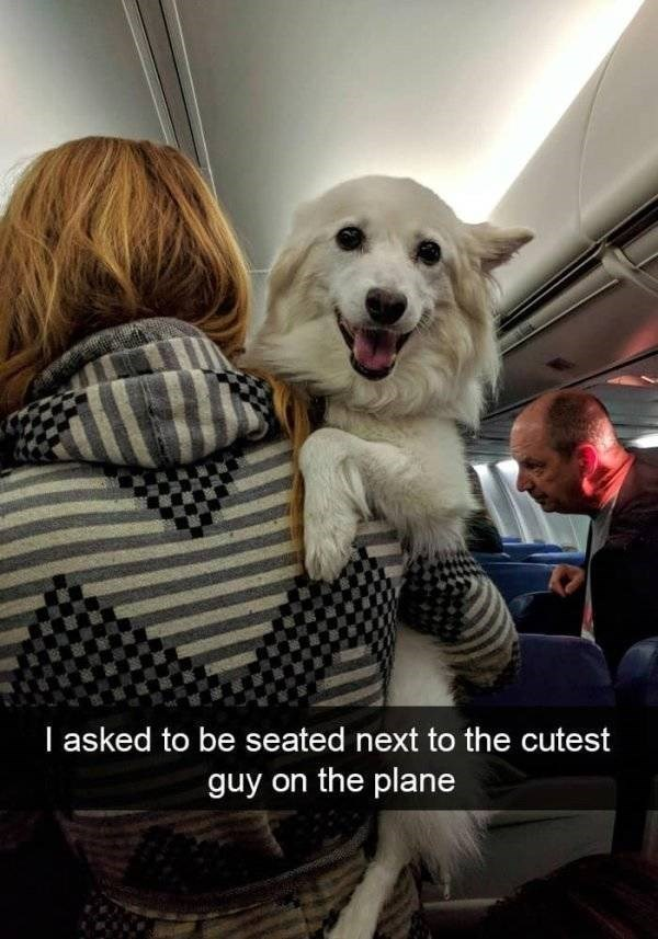 dog snapchat - Dog - I asked to be seated next to the cutest guy on the plane