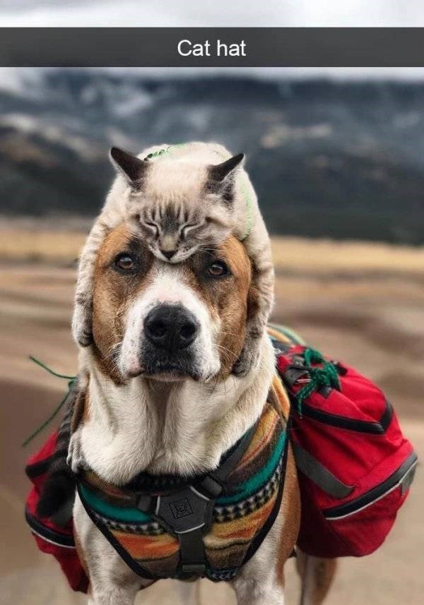 dog snapchat - Mammal - Cat hat