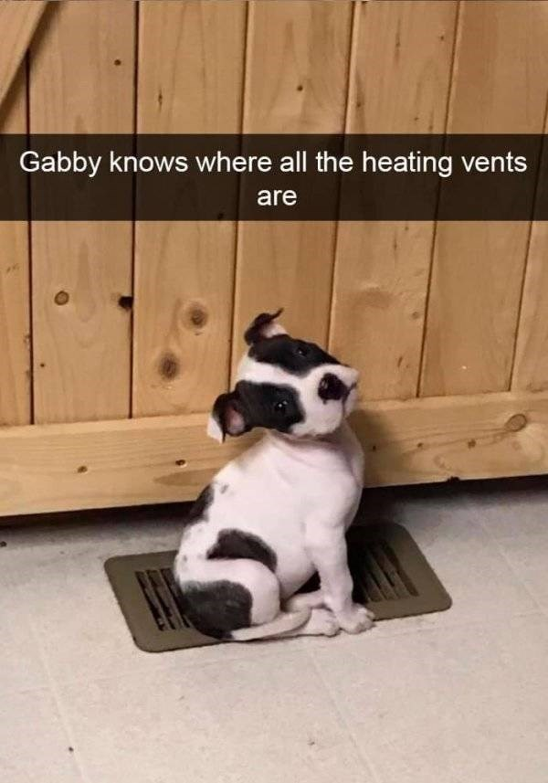 dog snapchat - Mammal - Gabby knows where all the heating vents are