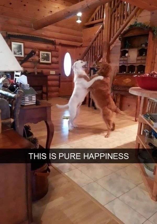 dog snapchat - Hardwood - THIS IS PURE HAPPINESS