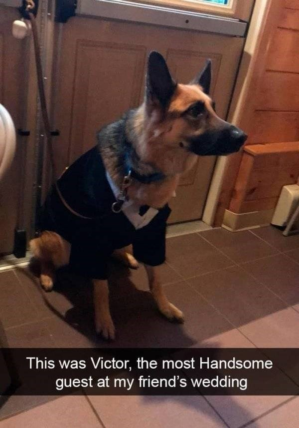 dog snapchat - Mammal - This was Victor, the most Handsome guest at my friend's wedding