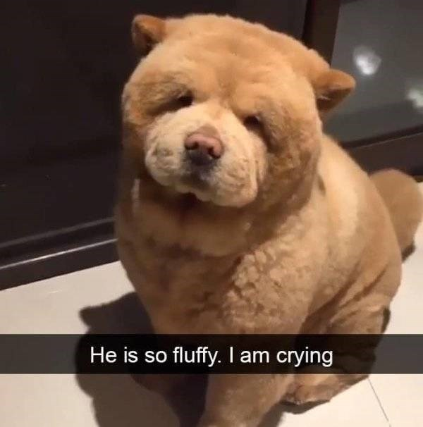 dog snapchat - Vertebrate - He is so fluffy. I am crying