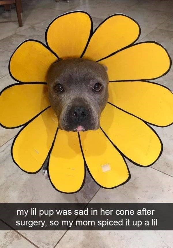 dog snapchat - Yellow - my lil pup was sad in her cone after surgery, so my mom spiced it up a
