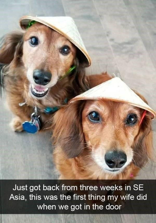 dog snapchat - Dog - Just got back from three weeks in SE Asia, this was the first thing my wife did when we got in the door