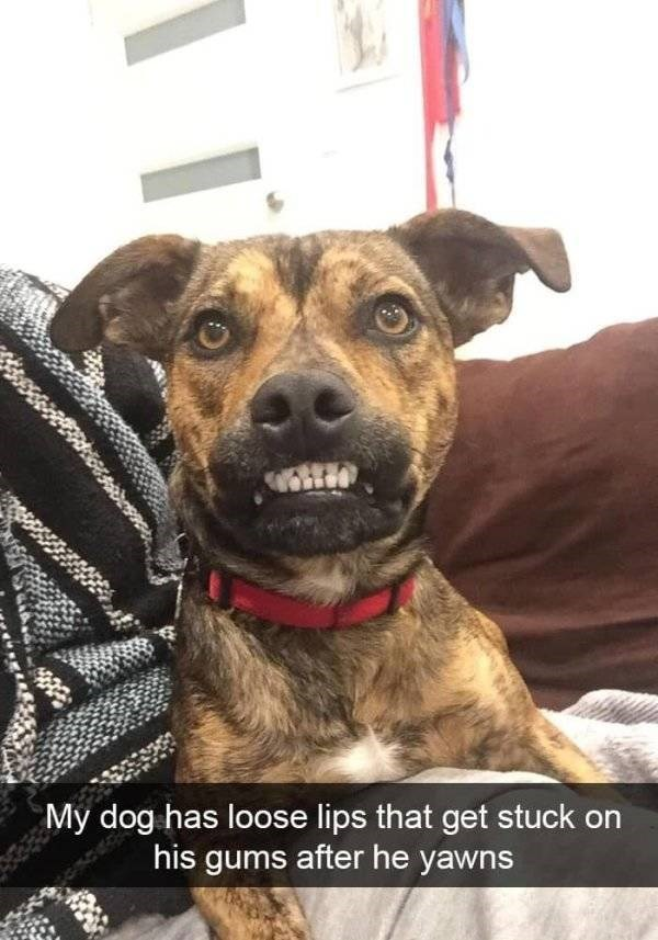 dog snapchat - Dog - My dog has loose lips that get stuck on his gums after he yawns