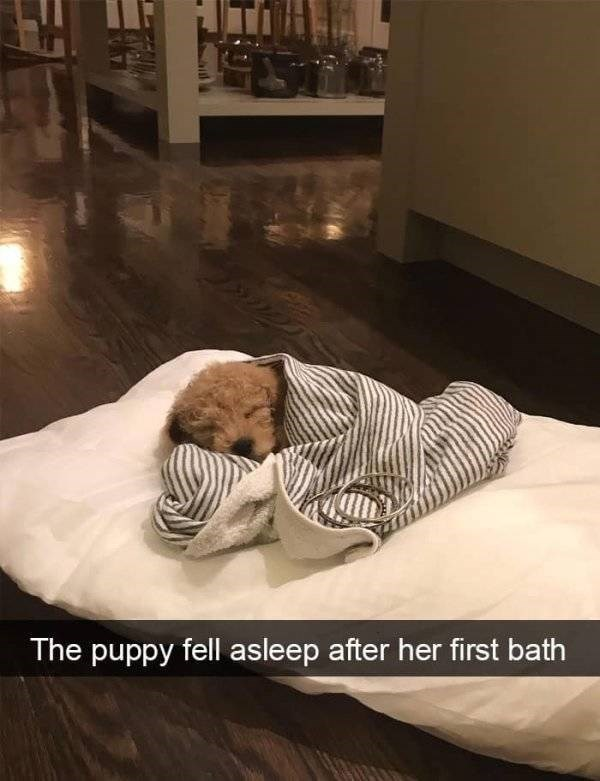 dog snapchat - Furniture - The puppy fell asleep after her first bath
