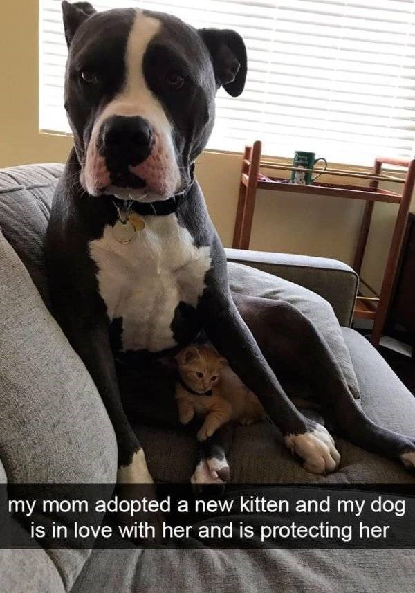 dog snapchat - Dog - my mom adopted a new kitten and my dog is in love with her and is protecting her
