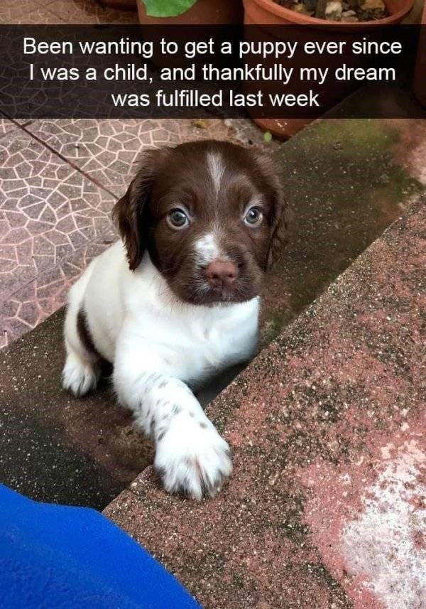 dog snapchat - Dog - Been wanting to get a puppy ever since I was a child, and thankfully my dream was fulfilled last week