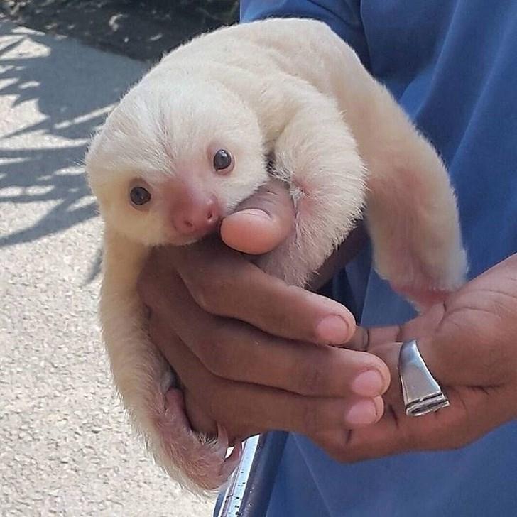 baby animal - Nose