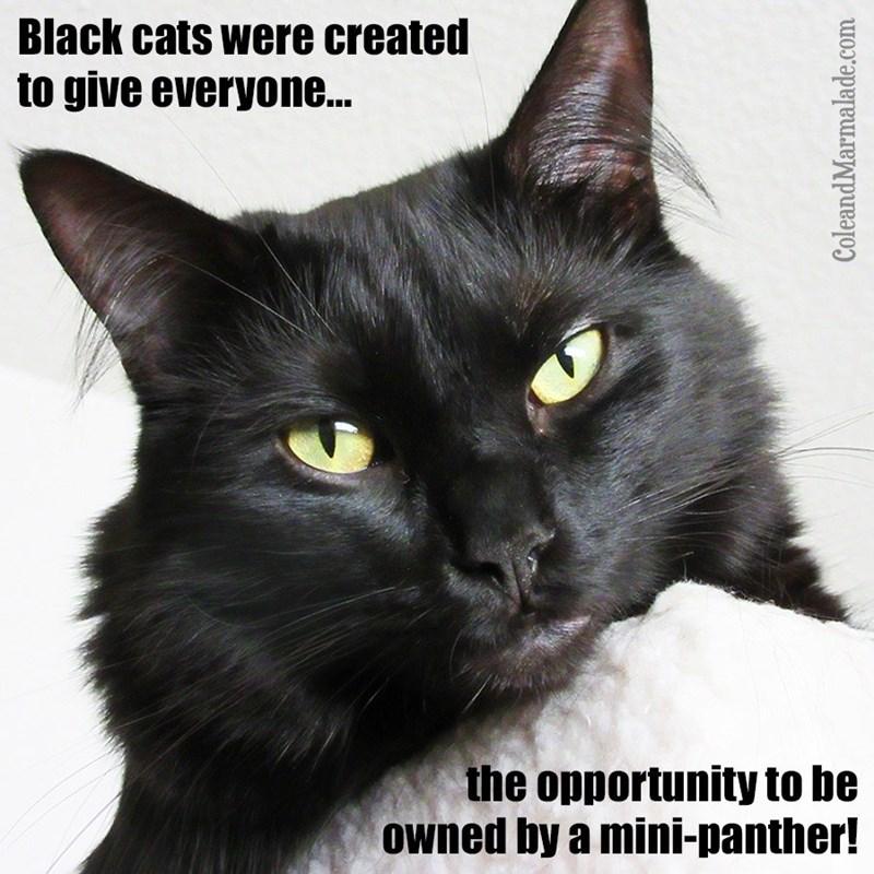 cat memes - 9352239360
