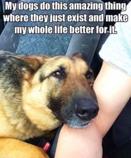 dog memes - 9352247552