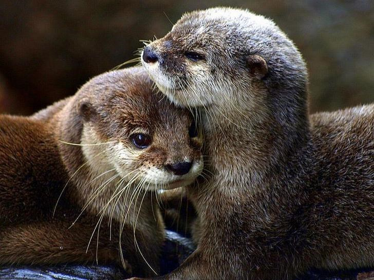 cute otters - Mammal