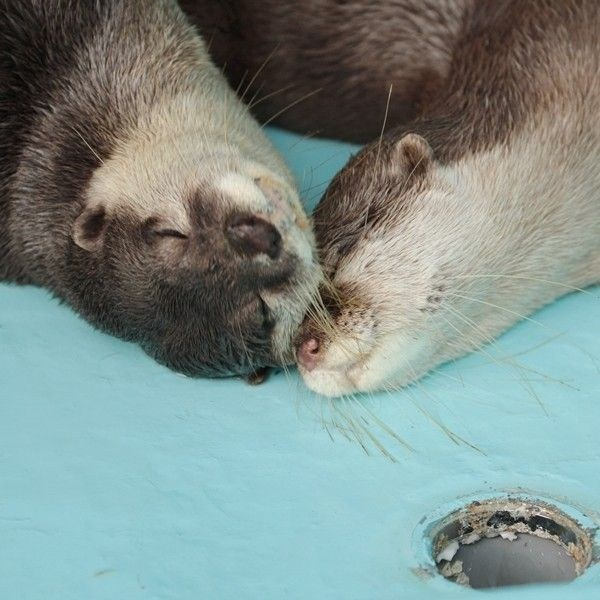 cute otters - Otter