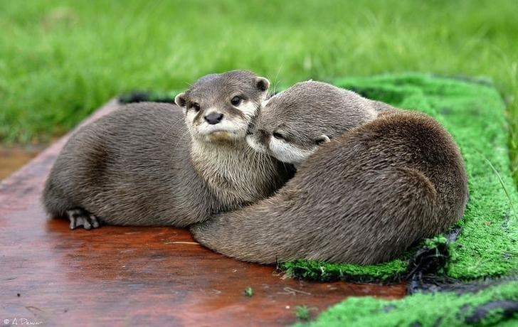 cute otters - Vertebrate