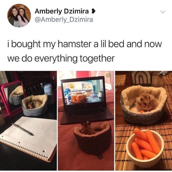 Organism - Amberly Dzimira @Amberly Dzimira ibought my hamster a lil bed and we do everything together