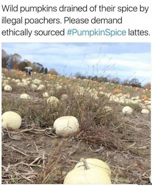 "Funny meme that reads, ""Wild pumpkins drained of their spice by illegal poachers. Please demand ethically sourced #PumpkinSpice lattes,"" above a photo of some white pumpkins in a pumpkin patch"