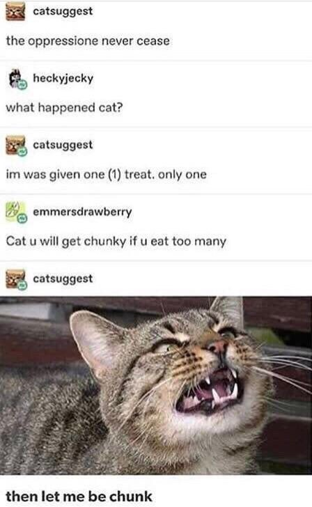 meme - Cat - catsuggest the oppressione never cease heckyjecky what happened cat? catsuggest im was given one (1) treat. only one emmersdrawberry Cat u will get chunky if u eat too many catsuggest then let me be chunk